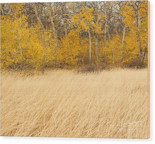 Aspen And Grass Wood Print