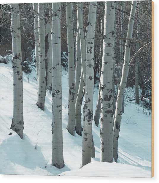 Aspen Have Eyes Wood Print