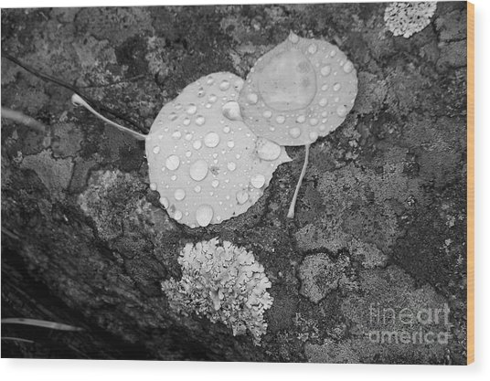 Aspen Leaves In The Rain Wood Print