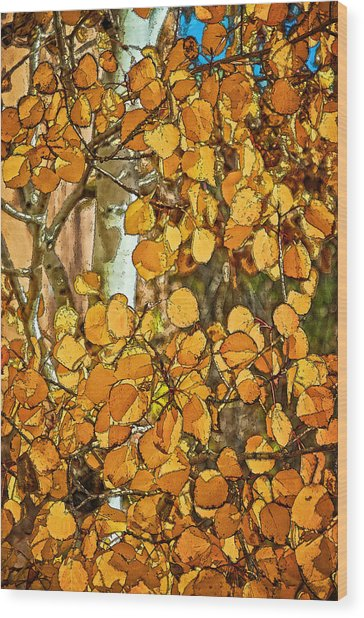 Aspens Gold Wood Print