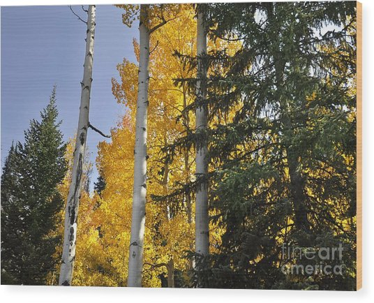 Aspens High In The Sky Wood Print by Nava Thompson
