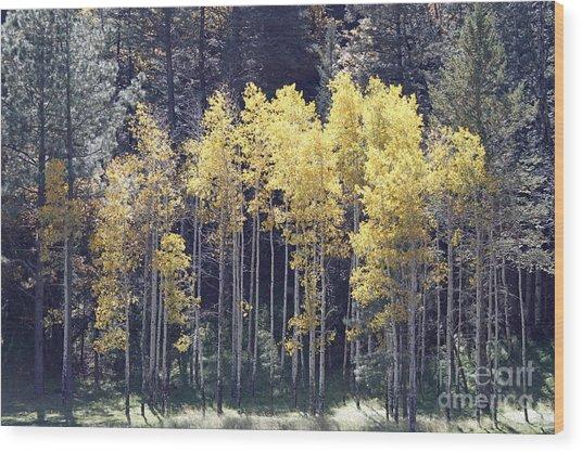 Aspens In Sunlight Wood Print