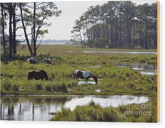 Assateague Wild Horses Feeding Wood Print