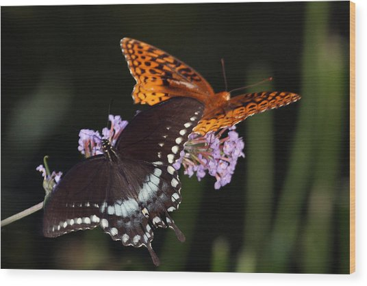 August Butterflies Wood Print by Kathryn Mayhue