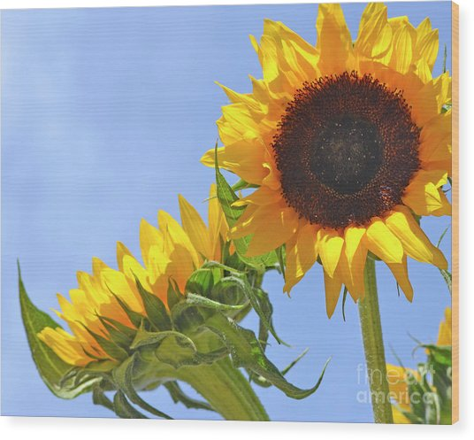 August Sunshine Wood Print