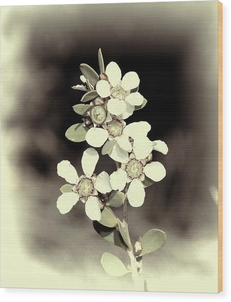 Australian Coastal Wildflowers Wood Print