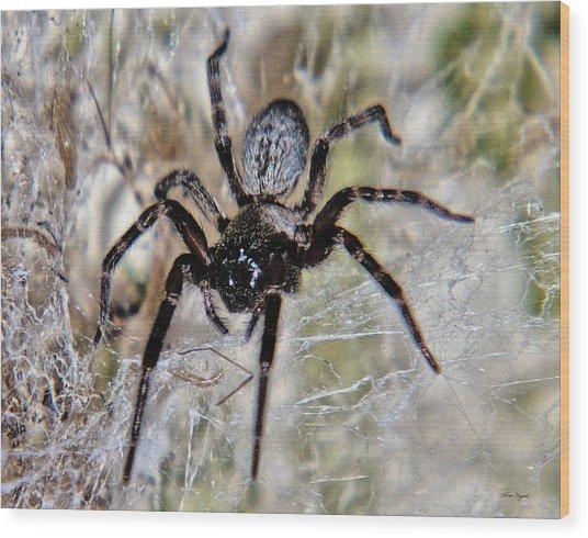 Australian Spider Badumna Longinqua Wood Print