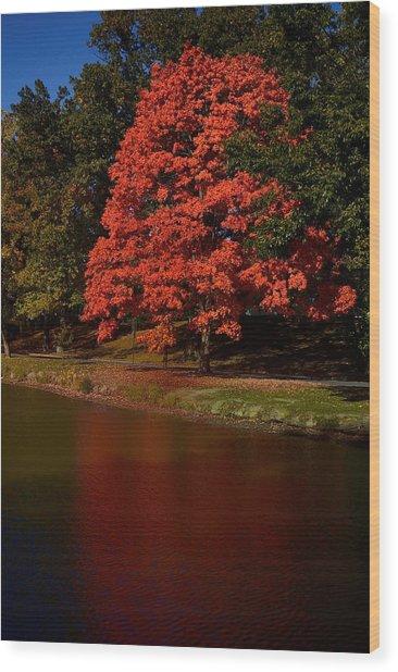Autum Color Wood Print