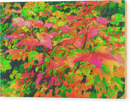 Autum Maple Leaves 3  Wood Print by Lyle Crump