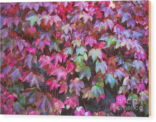 Autumn 12 Wood Print by Elena Mussi
