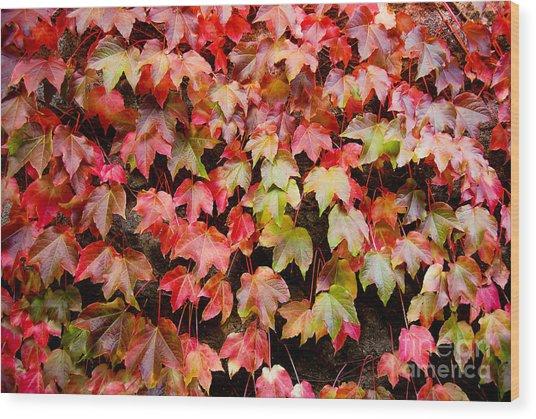 Autumn 5 Wood Print by Elena Mussi