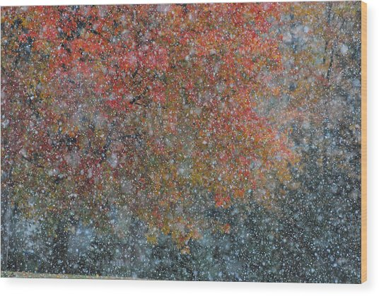 Autumn And Winter Wood Print by Kimberly Little