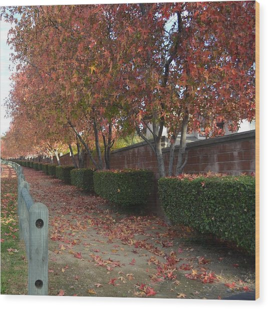 Autumn At Its Best Wood Print by Naomi Berhane