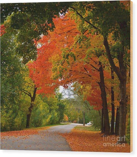 Autumn Canopy Wood Print