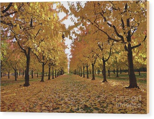 Autumn Colors At He's Best Wood Print