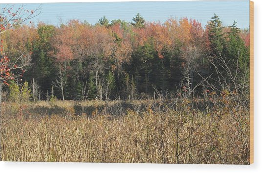 Autumn Field And Pine Wood Print by Loretta Pokorny