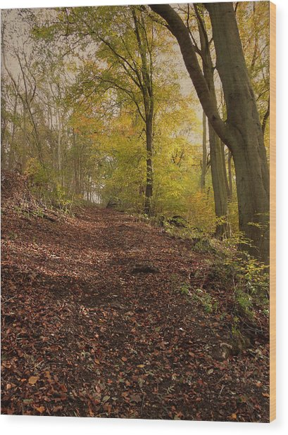 Autumn In Brantingham Woods Wood Print
