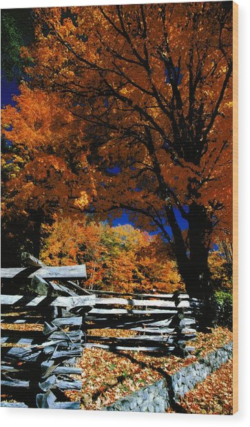Autumn In Holderness Wood Print