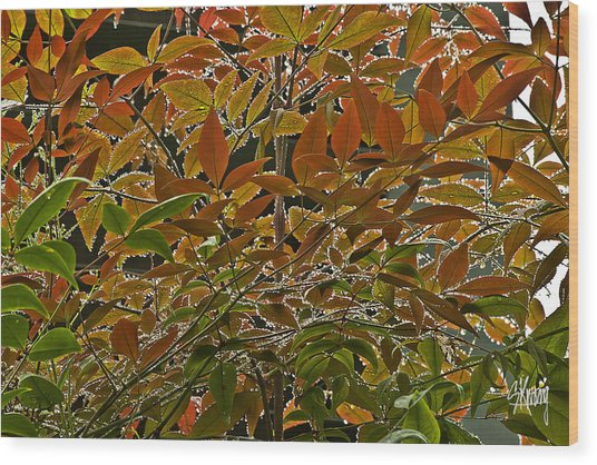 Autumn In Muttart Wood Print