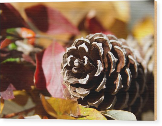 Autumn In Russet Wood Print