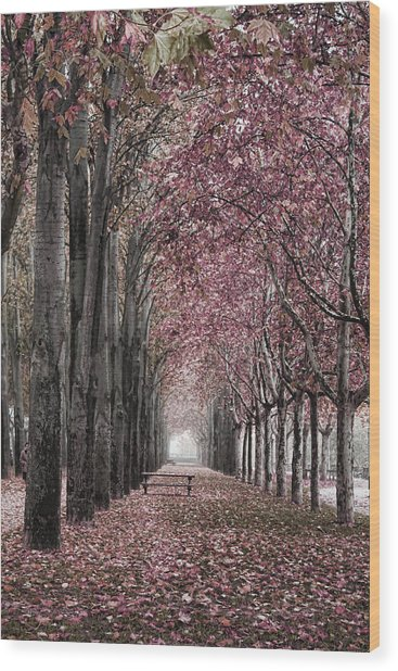 Autumn In The Grove Wood Print