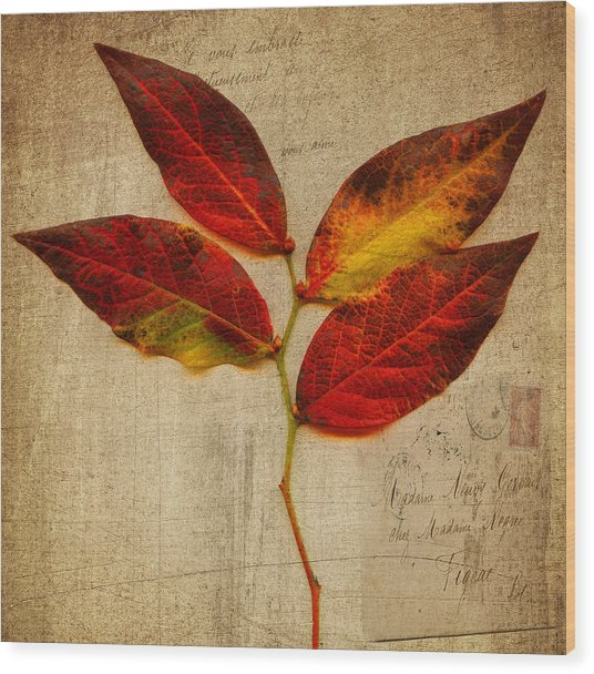 Autumn Leaf With Texture Wood Print