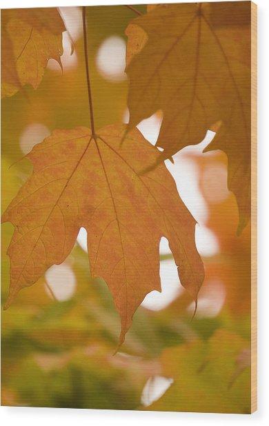 Autumn Maple Leaf  Wood Print
