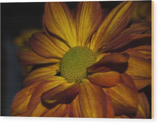Wood Print featuring the photograph Autumn Mum by Judy Hall-Folde