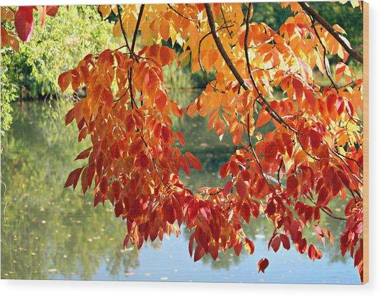 Autumn On The Pond Wood Print