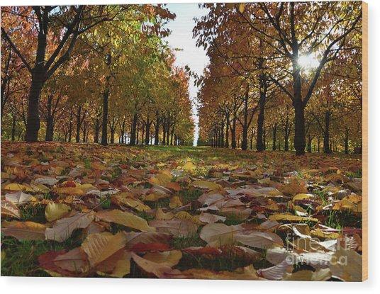 Autumn Sheets Carpet Wood Print