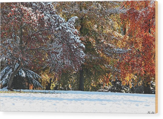 Autumn Snowstorm Wood Print by Kimberly Little