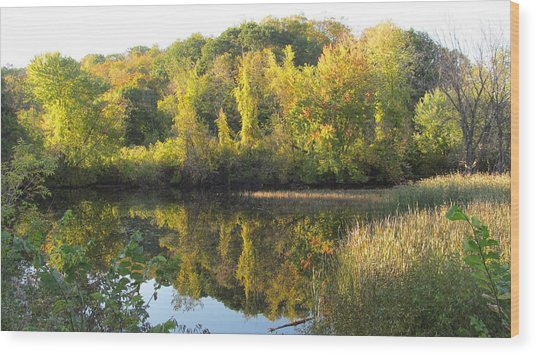 Autumn Sunlight On The Pond Wood Print