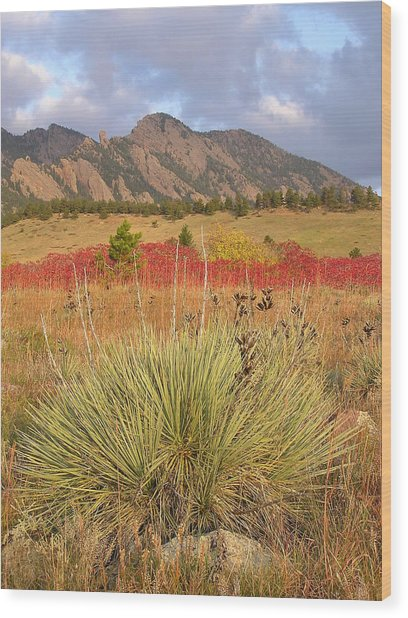 Autumn Sunrise Along The Mesa Trail Wood Print