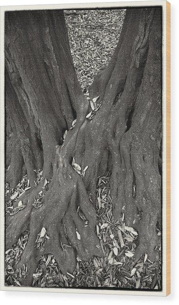 Autumn Wood Print by Tibor Puski
