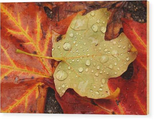 Autumn Treasures Wood Print by Matthew Green