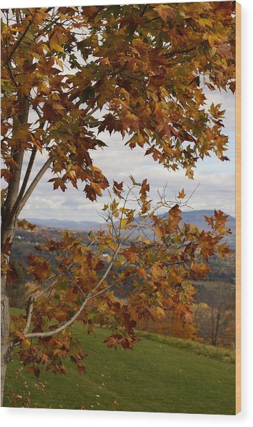 Autumn Trees Wood Print by Margaret Steinmeyer