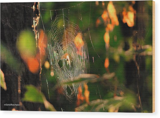Autumn Web Wood Print by Sarai Rachel