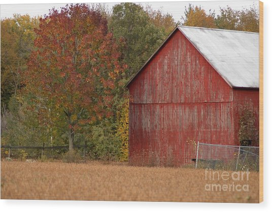 Autumnal Barn Wood Print by Ginger Harris