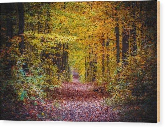 Autumns Canopy Wood Print