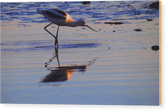 Avocet In The Dim Light Wood Print by Catherine Natalia  Roche