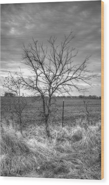B/w Tree In The Country Wood Print