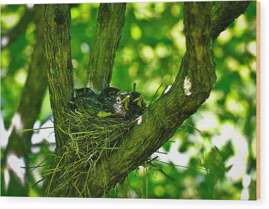 Baby Birds Wood Print by Erica McLellan