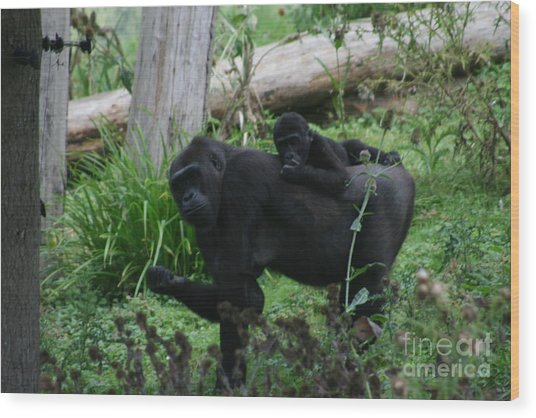 Baby Gorilla Wood Print by Carol Wright