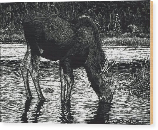 Baby Moose Grazing Wood Print by Robert Goudreau
