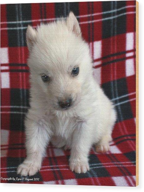 Baby Wolfdog Wood Print