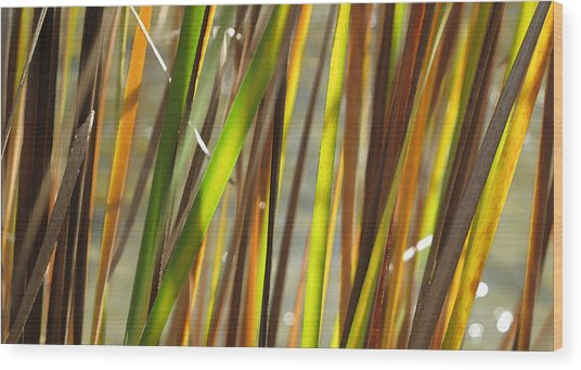 Backlit Grass Wc 2  Wood Print by Lyle Crump