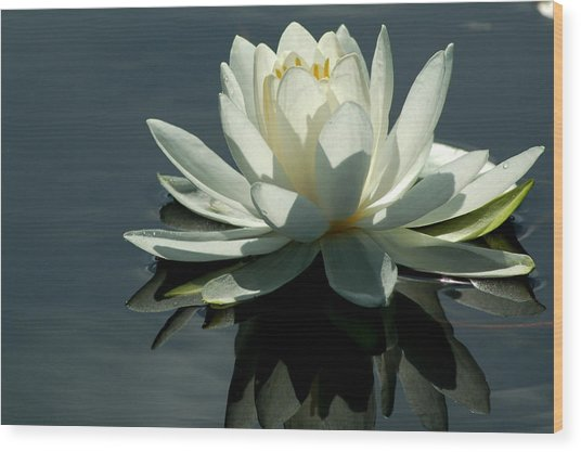 Backlite Lily Wood Print