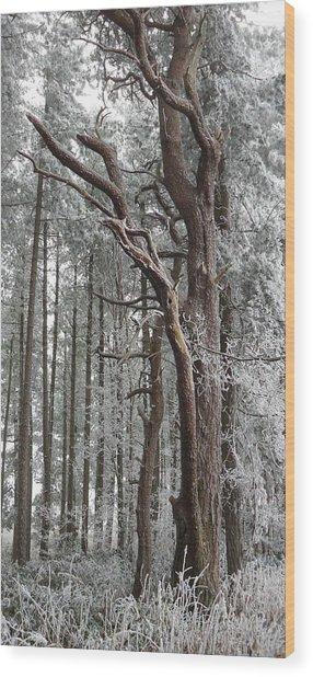 Badbury Clump Wood Print by Michael Standen Smith