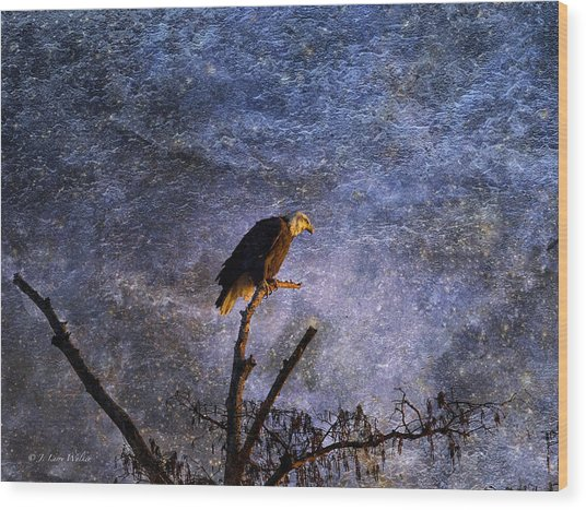Bald Eagle In Suspense Wood Print