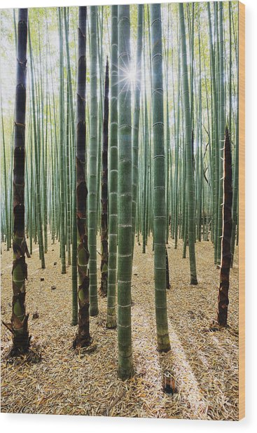 Bamboo Forest Wood Print by Jeremy Woodhouse